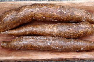 Yuca o cassava