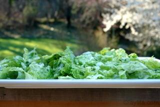Mezclar las hojas de lechuga con un cuarto del aderezo y ponerlas en una bandeja o fuente