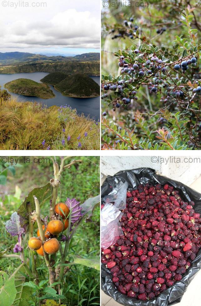 Fruits sauvages en Équateur