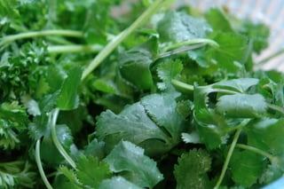 Cilantro and parsley for seco de pollo
