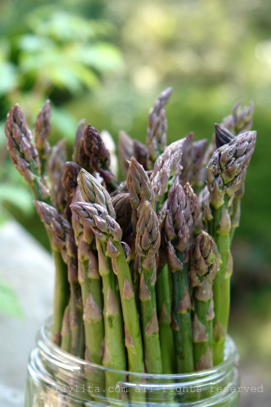 Asparagus to be grilled