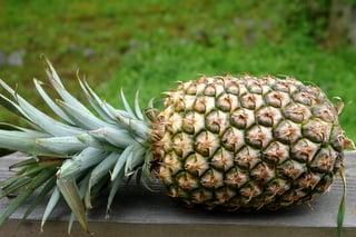 Ananas frais pour le flan