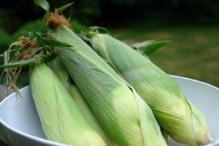 Espigas de milho verde
