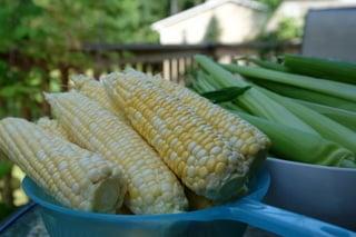 Espigas de milho verde descascadas