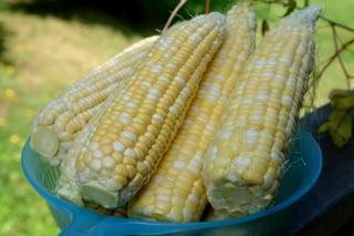 Espigas de milho verde prontas para serem usadas