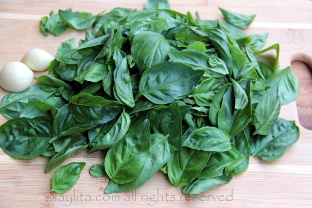 Fresh basil and garlic for basil oil