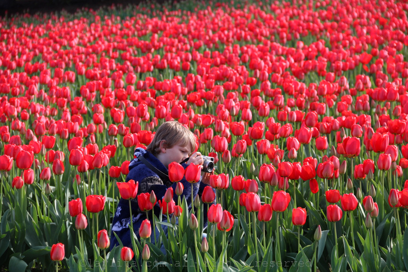 Small photographer in a sea of red tulips