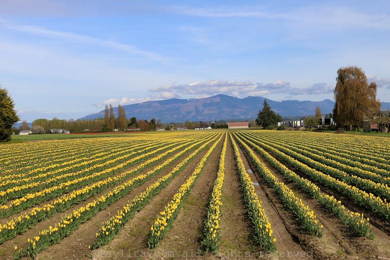 Farm in Mt Vernon area of Washington