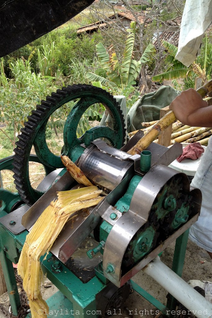 Making guarapo or sugar cane juice