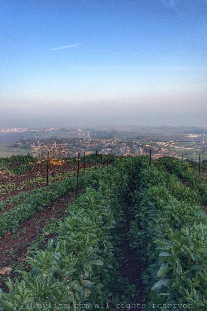 Organic garden overlooking Galilee at Mizpe Hayamim