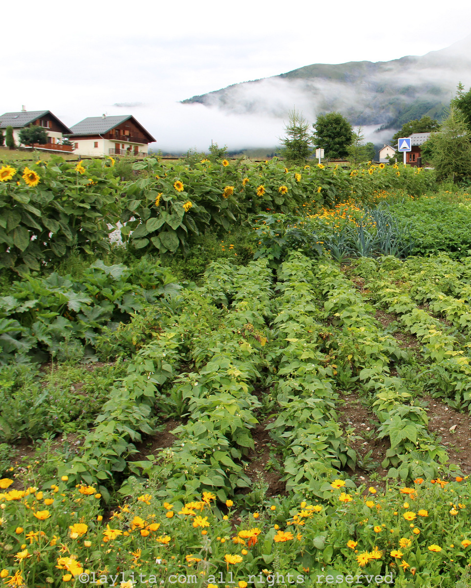 Vegetable garden in the Alps